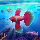 Fish Tycoon 2 Virtual Aquarium MOD много денег/камней